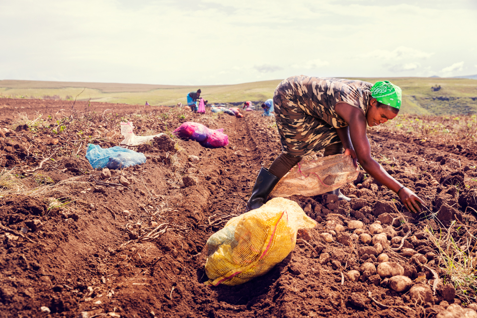 Igor Emmerich, South Africa, farm, farming, farmer, woman, black, African, hard work, sunny, potatoes, warm, digging