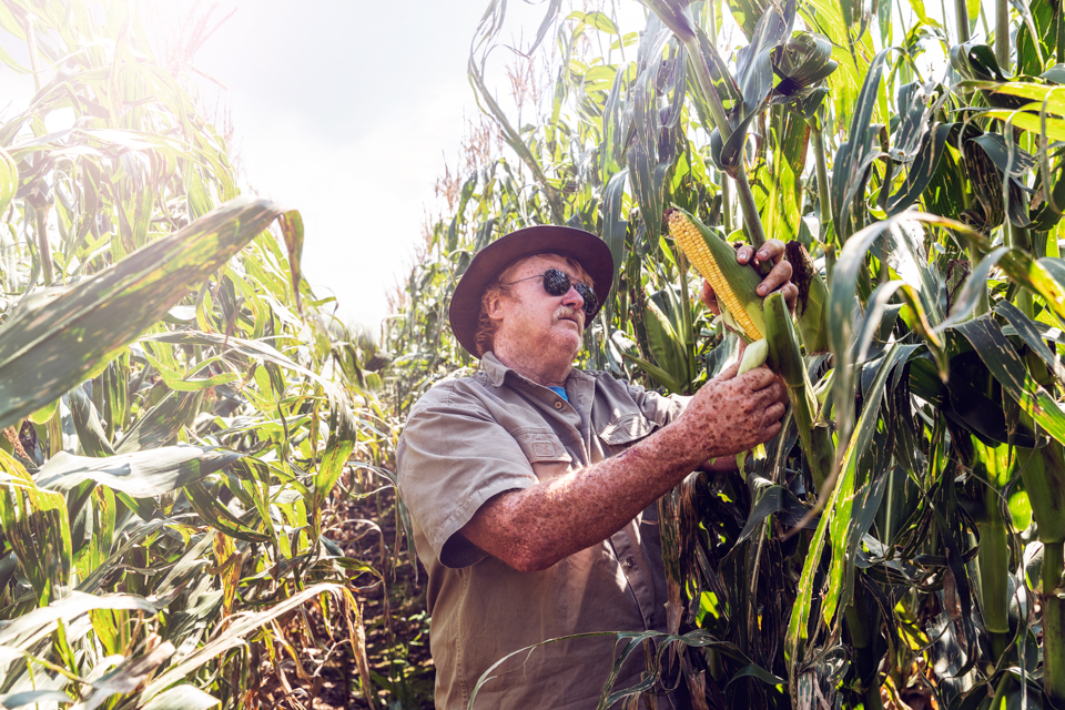 Igor Emmerich, South Africa, farm, farming, farmer, man, white, African, quality control, sunny, corn, warm, inspecting