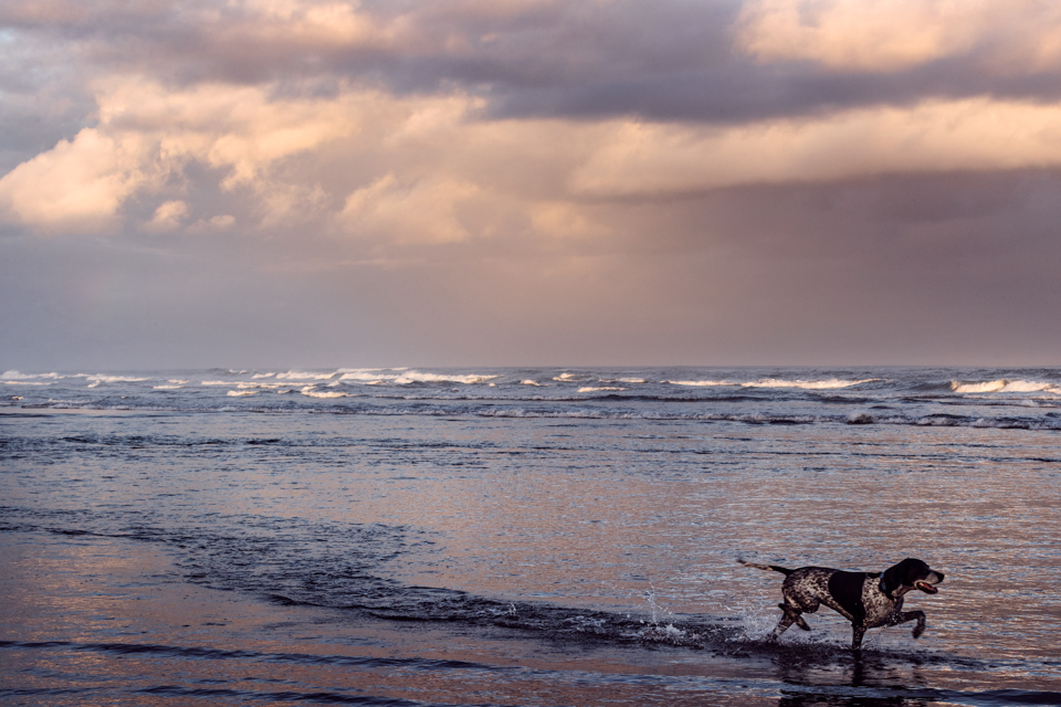 Africa, African, Beach, coast, dog, Igor Emmerich, landscape, landscape photographer, leisure, moody, sea, South Africa, stormy